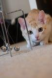 Cat Curious Arkivbild