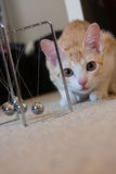Cat Curious Stock Fotografie