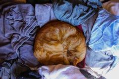 Cat Curled Up, tomando uma sesta fotos de stock royalty free