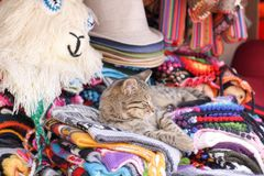 Cat at Cusco royalty free stock image
