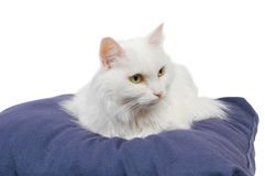 Cat on cushion 3 Royalty Free Stock Image