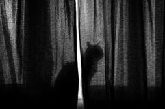 Cat in the cut royalty free stock photos
