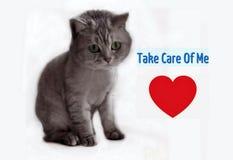 Cat Cut British Kitty With röd hjärta, djurskydd, älskvärt kattungekort arkivfoton