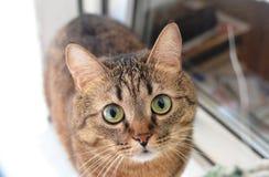 cat cute Υψηλή συγκέντρωση της θερμότητας και του fluffiness Στοκ Εικόνα