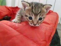 cat cute στοκ φωτογραφία με δικαίωμα ελεύθερης χρήσης