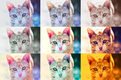 cat cute Στοκ Φωτογραφία