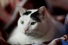 cat cute Στοκ Εικόνα
