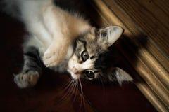 cat cute Στοκ Φωτογραφίες