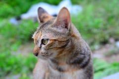cat cute στοκ εικόνα με δικαίωμα ελεύθερης χρήσης