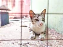 Cat. Cute cat animal Royalty Free Stock Photo