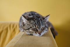 Cat, Cute, Animal, Couch, Sofa Stock Photos