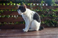 Cat 8. Cute cat on banch Royalty Free Stock Photos