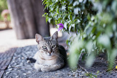 Cat. Cute cat enjoying his life outdoors Royalty Free Stock Image