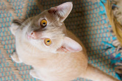 Cat. Cute eyes look at me Royalty Free Stock Images