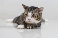 cat cute gray Στοκ φωτογραφίες με δικαίωμα ελεύθερης χρήσης