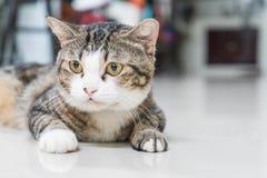 cat cute gray Στοκ Εικόνες