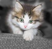 Cat cute  kitten animal Royalty Free Stock Photos