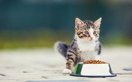 Cat. Cute little kitten with a bowl of granules at home or in the garden Royalty Free Stock Images