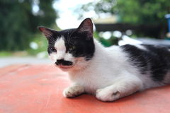 A cat with cute mustache and bokeh background royalty free stock photos