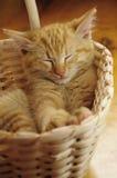 Cat. Cute orange cat sleeping in basket Royalty Free Stock Image