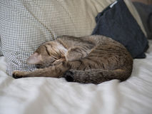 Cat cute sleep on bed Stock Photos