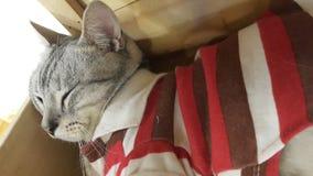 Cat. Cutie cat alway sleep in coffee shop. Happy cat pet cat cafe royalty free stock image