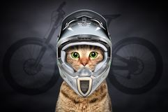 Cat in cycling helmet. On the background of the silhouette of a bicycle stock photos