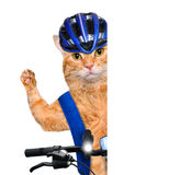 Cat cyclist. Stock Photography