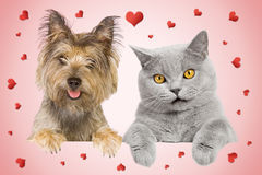 Cat and dag card. Cat and dog valentines greeting card Royalty Free Stock Image