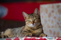 Cat in Dahab Royalty Free Stock Photography