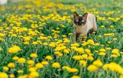 Cat dandelion Royalty Free Stock Photo