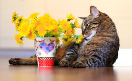 Cat and dandelions Royalty Free Stock Image