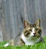 CAT DANS L'HERBE Photographie stock libre de droits