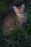 Cat in the dark. Orange cat sitting on the ground Royalty Free Stock Photos