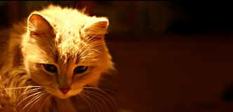 Cat in the dark Stock Photography