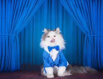 Cat in a dark blue jacket and tie on stage Royalty Free Stock Photo
