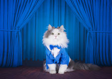 Cat in a dark blue jacket and tie on stage Stock Photos