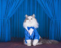 Cat in a dark blue jacket and tie on stage Stock Images