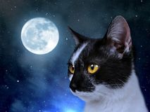Cat in the dark night. Stock Photos