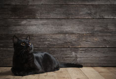 Cat on dark wooden background Stock Image