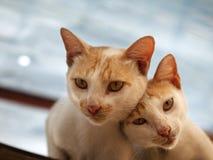 CAT DE COUPLES REGARDANT L'APPAREIL-PHOTO Photographie stock libre de droits