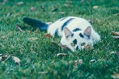 CAT DE WHITE-BLACK Riconar, 55mm, vieille lentille f2,2 image stock