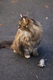 Cat with dead mouse on driveway Royalty Free Stock Images
