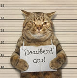 Cat is a deadbeat dad Royalty Free Stock Photos