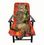 Cat on deck chair stock images
