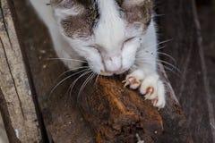 Cat Declawing natur med trä Arkivbilder