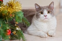 Cat and a decorated Christmas tree. Close up of a cat lying down next to a decorated Christmas tree and looking at camera stock photo