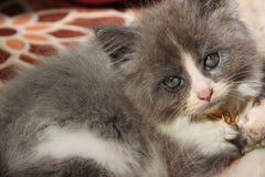 CAT del gatito Foto de archivo libre de regalías