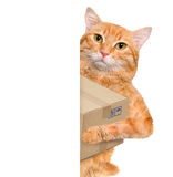 Cat delivery post box . Royalty Free Stock Photos