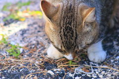 Cat. In Delray beach, Florida, Palm beach Royalty Free Stock Images